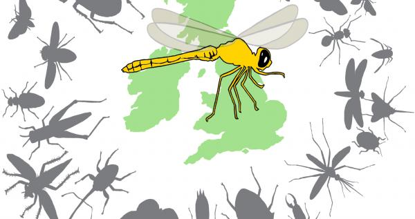 Insect Isles logo, an illustration of a yellow dragonfly, over a green silhouette of the British Isles, surrounded by grey silhouettes of different types of insects
