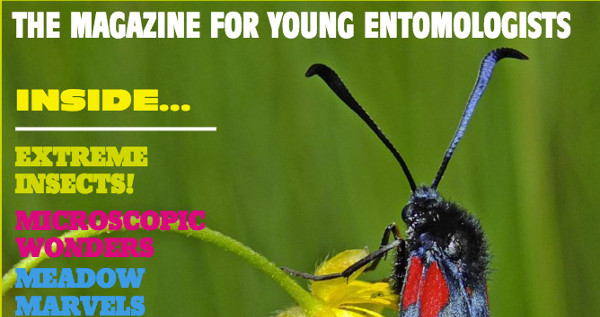 INSTAR magasine cover with article titles and a burnet moth on a yellow flower