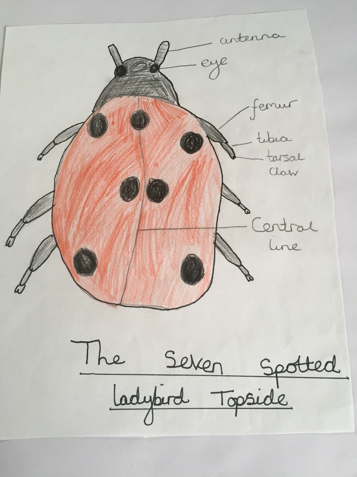 A Great Bug Hunt winning entries from Wickham Market Primary School