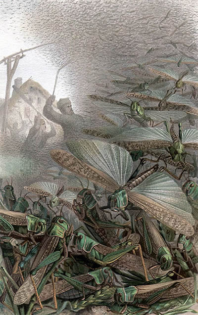 Illustrated image of locusts swarming and peasant farmers fighting them to save their crops