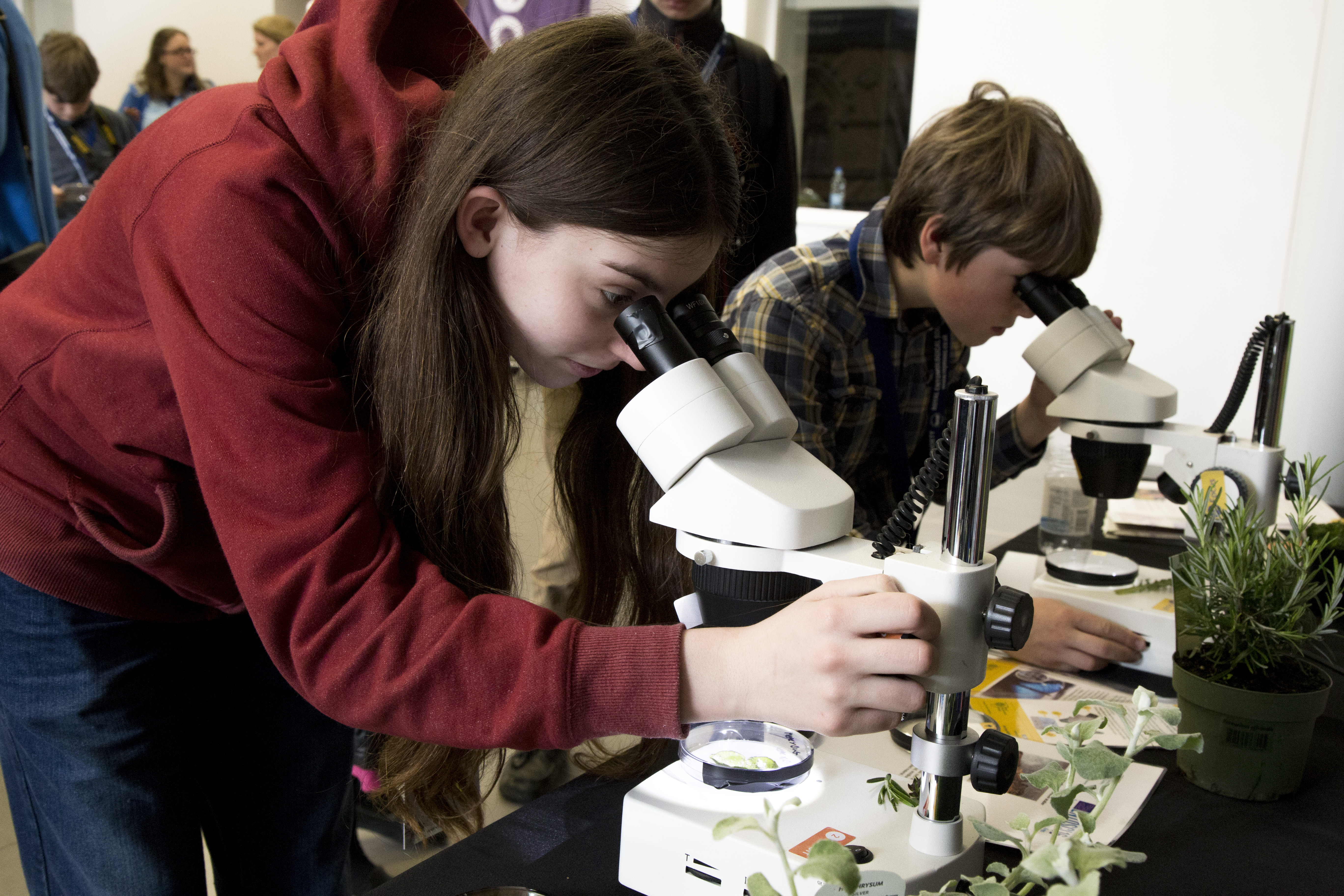 Girl and boy looking at specimens under microscopes