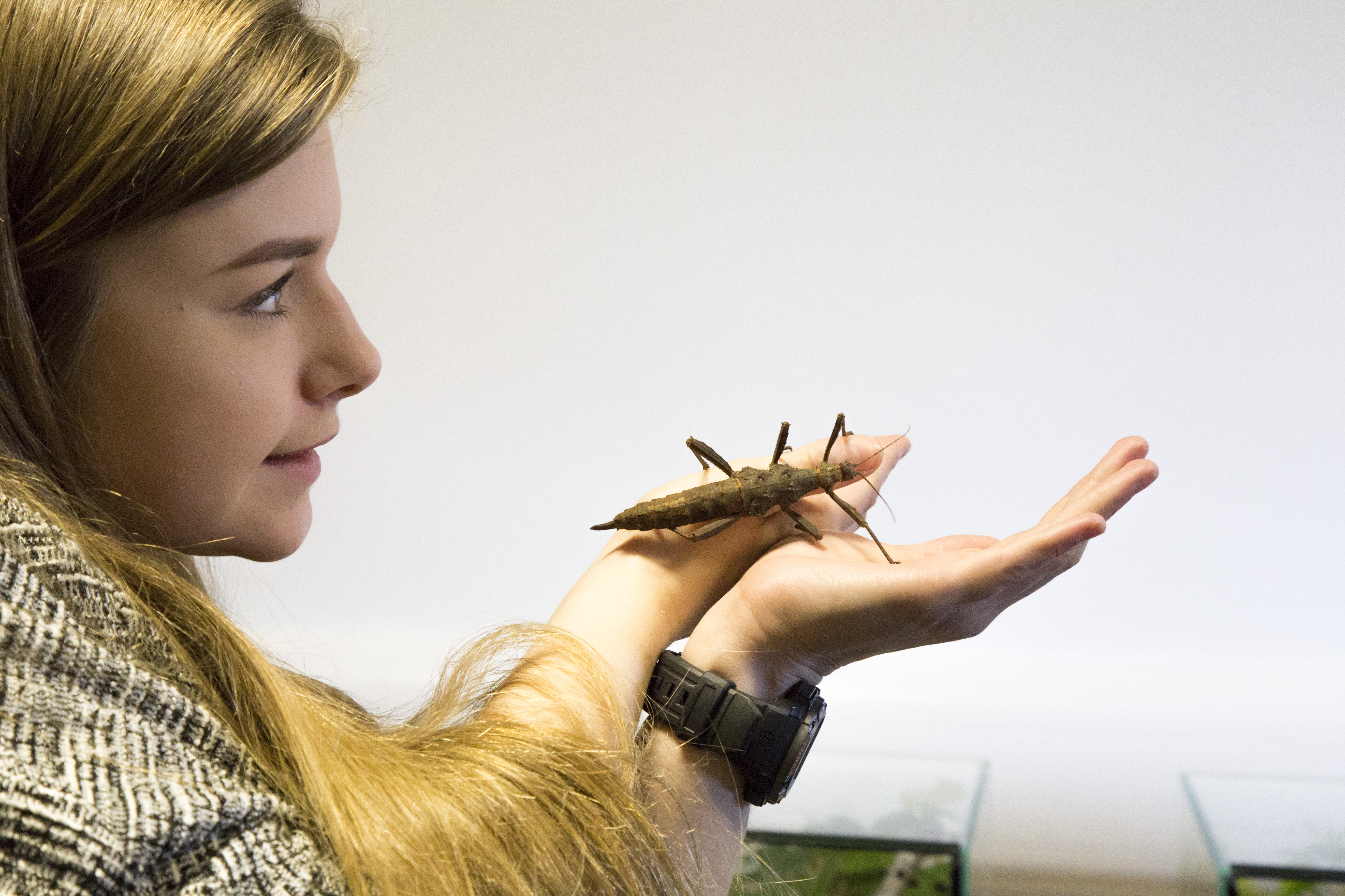 Girl holding stick insect at EntoSci