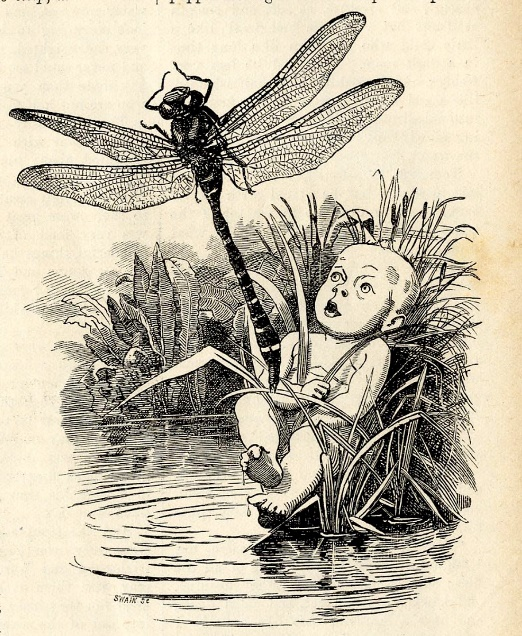 Linley Sambourne: Tom and the Dragonfly