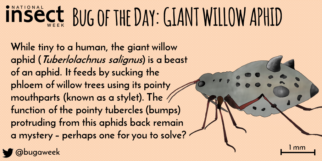 Bug of the Day - Tuesday