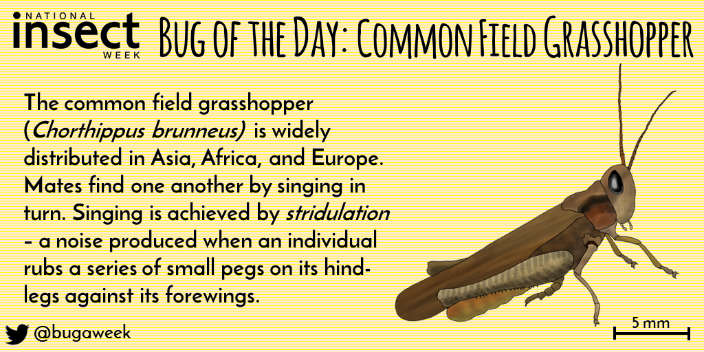 Bug of the Day -Wednesday