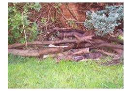 Logs laying in a pile in a garden
