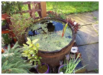 Image of a garden pond