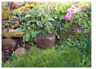 Image of pink flowers and green ferns in garden rockery