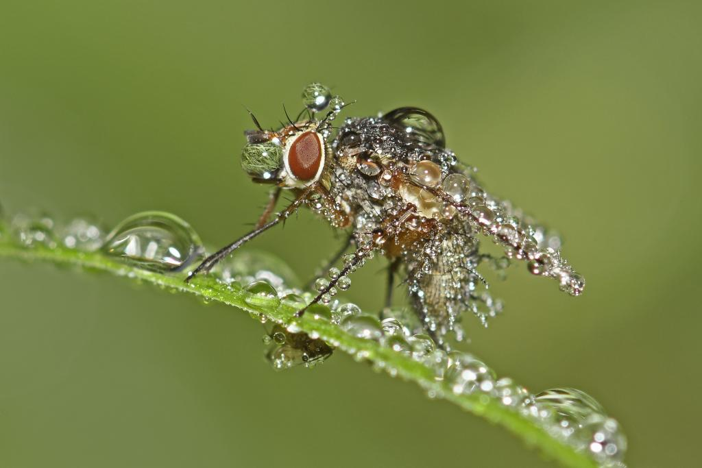 Specially Commended – Beverley Brouwer Bejewelled Fly