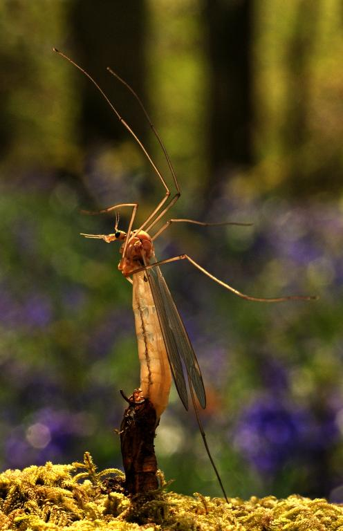 Emerging Crane Fly, First Prize 2010 NIW Photography Competition adult category