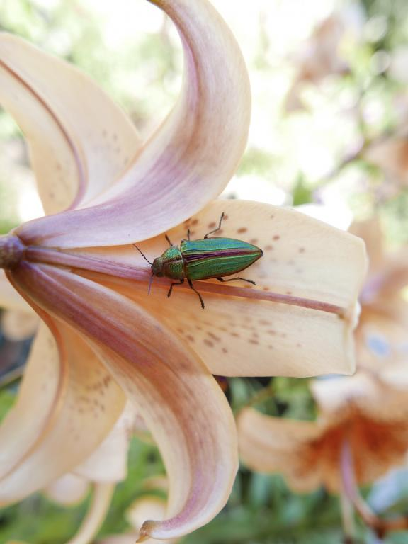 Specially Commended – Gavin Pandya Golden Beprestid on Iris