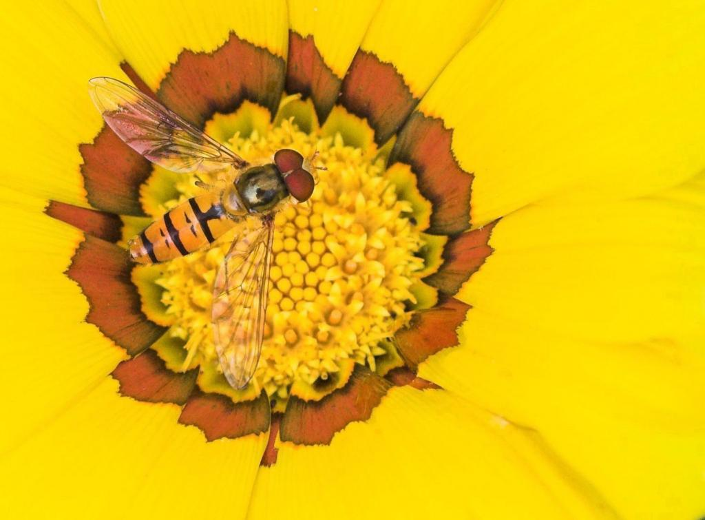 Composition in yellow and red, Highly Commmended 2006 NIW Photography Competition British insect category