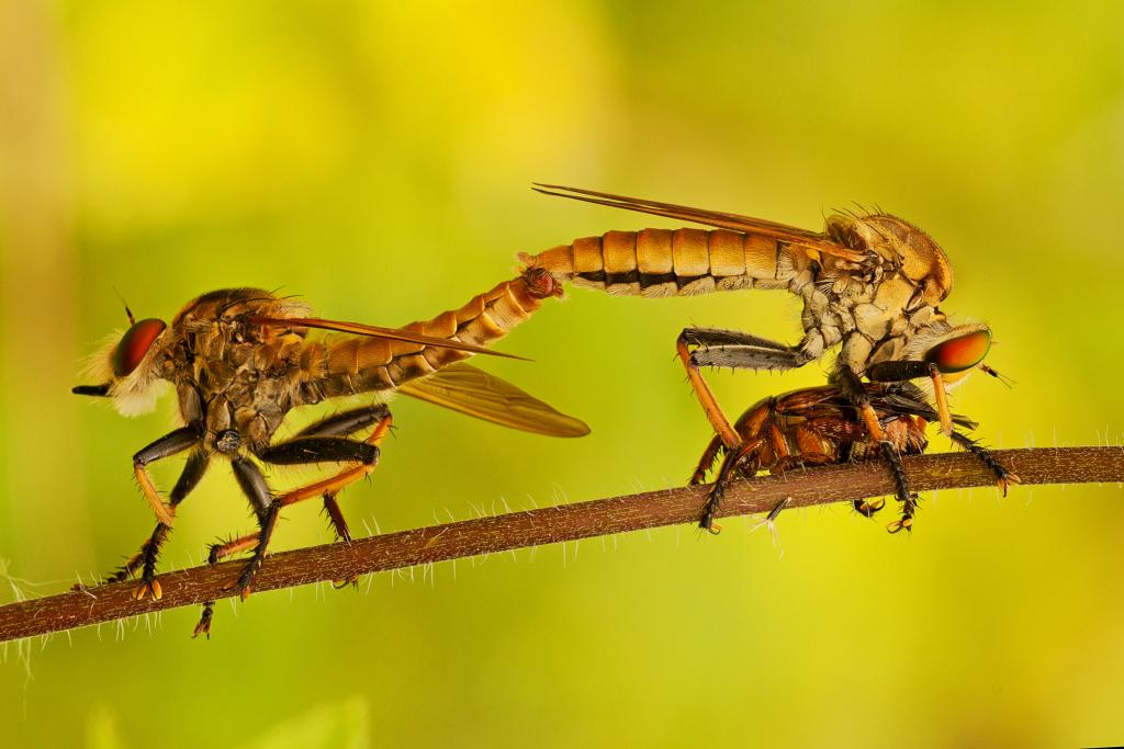 Multi-tasking, Commended 2014 NIW Photography Competition Insects Alive category
