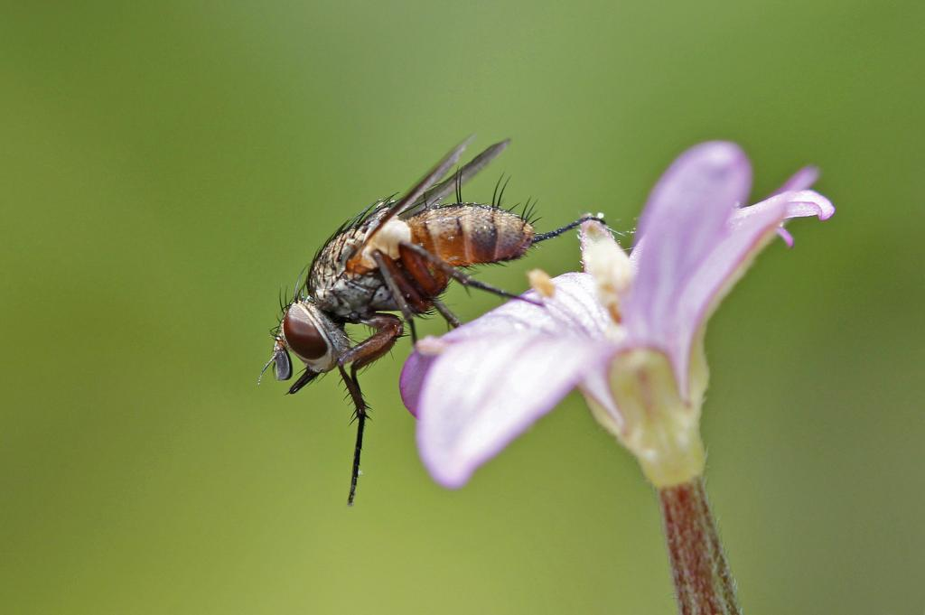'Jeff Goldblum lookalike' (unidentified fly), Commended in 2014 NIW Photography Competition Small is Beautiful category