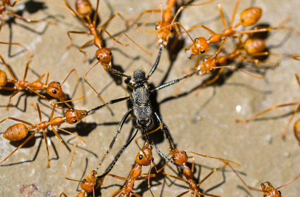 The Alamo! Commended 2014 NIW Photography Competition Insects Alive category