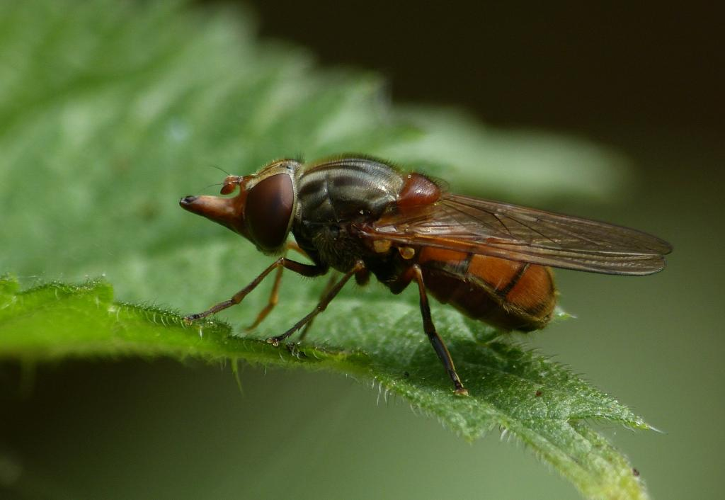 A snout of distinction, Commended in 2014 NIW Photography Competition Small is Beautiful category