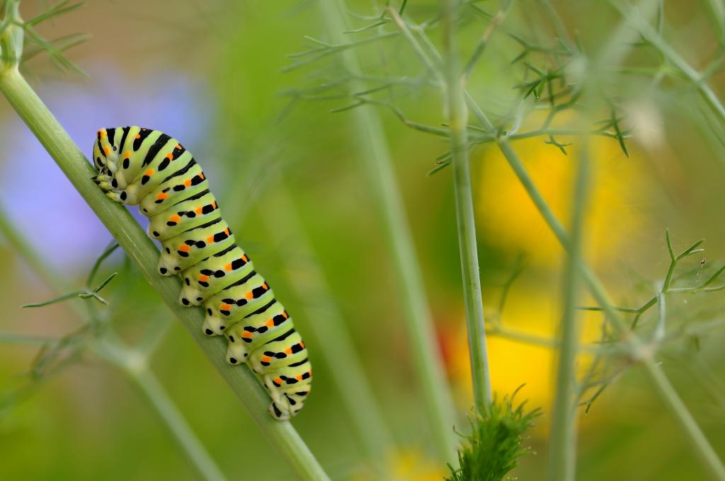 Resting time, Commended 2014 NIW Photography Competition Insects Alive category