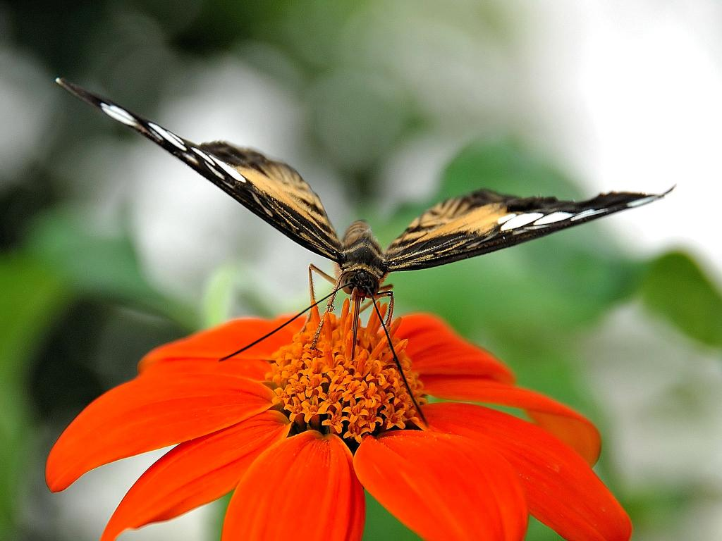 Butterfly feeding, Commended 2010 NIW Photography Competition adult category