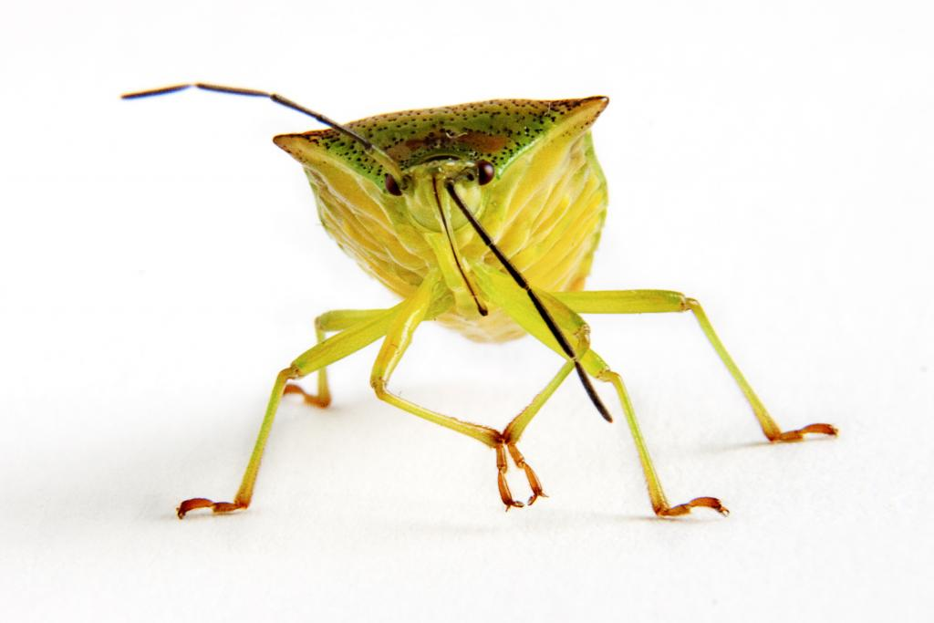 <p>Shieldbug, Commended 2012 NIW Photography Competition adult category</p>