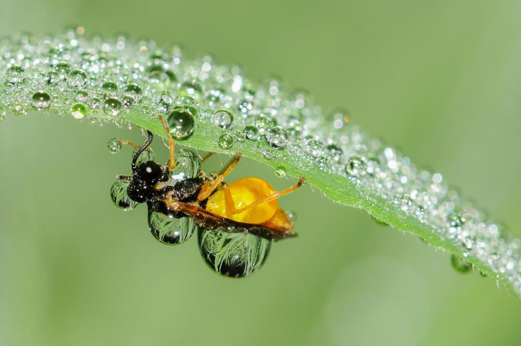 <p>Covered in dew drops (sawfly), Commended</p>
