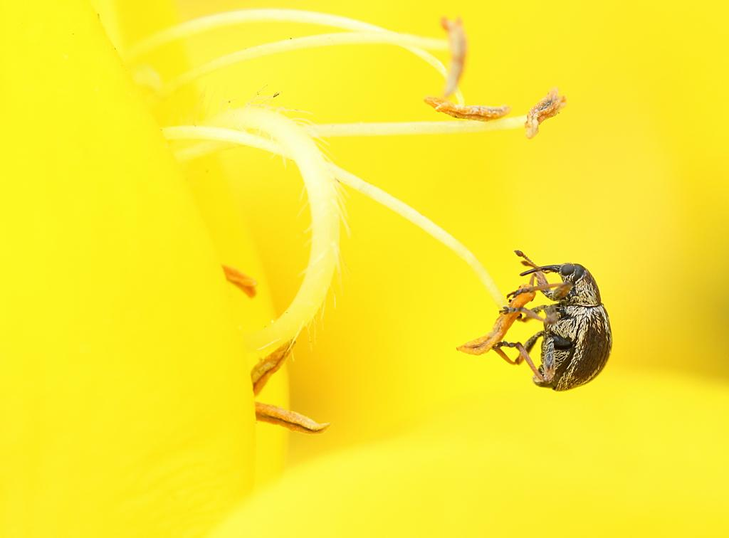 <p>Hangin' Tough - Broom Weevil, Specially Commended</p>