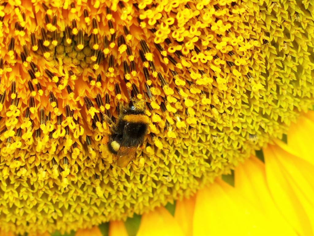 Pollination,First Prize
